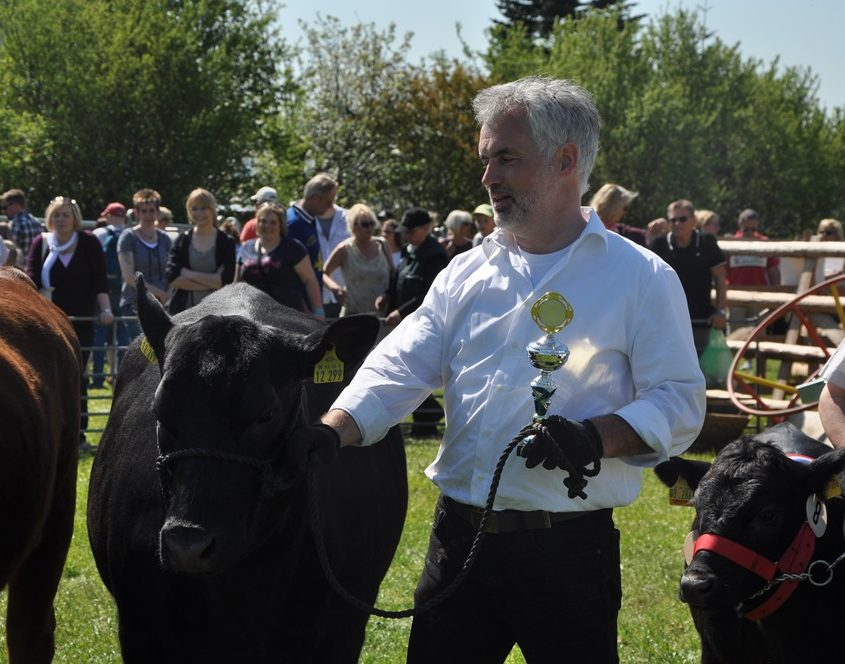 Presentation of Christelhoi Angus in Viöl 2016